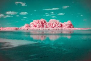 Infrared photography 8